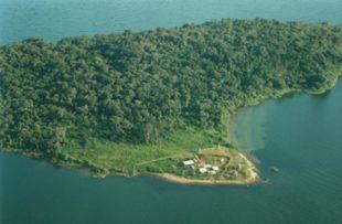 uganda_wildlife_chimps_NgambaIsland_30 (website)